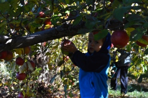It was sunny but really cold this day. The cold will be perfect for storing all the apples we picked.