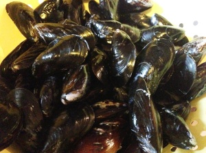 These mussels are closed tight, like clams!