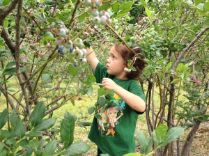 berry picker/littlejudeonfood.com