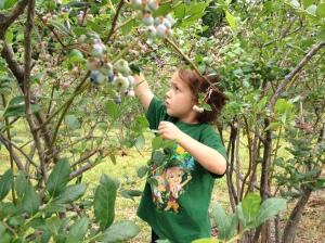 berry picker/littlejudeonfood.com